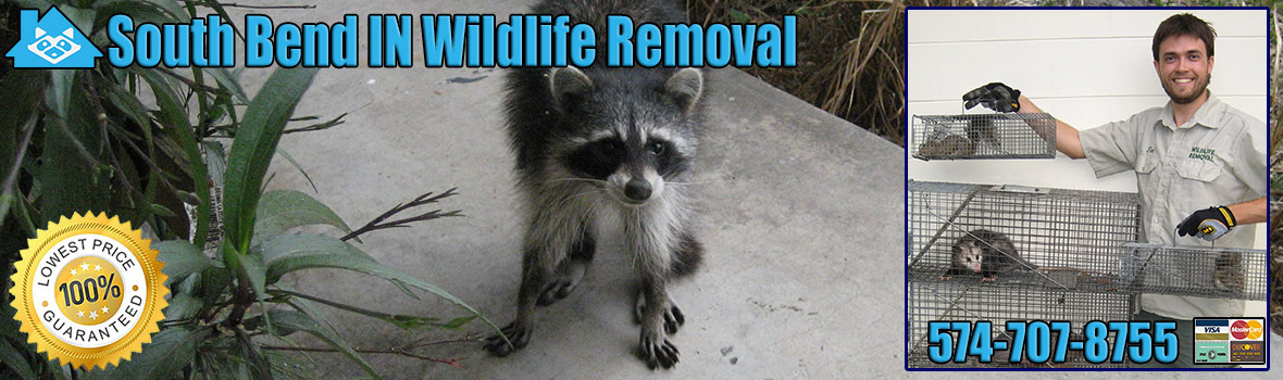 South Bend Wildlife and Animal Removal